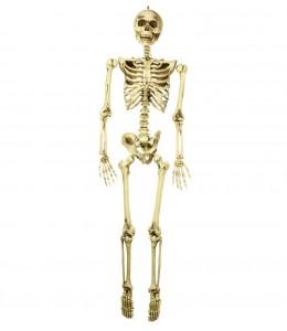 Esqueleto 160cm