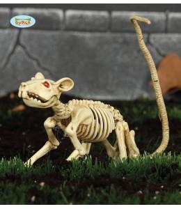 Esqueleto de Rata