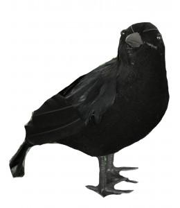 Cuervo 25cm