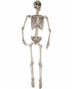 Esqueleto 165CM