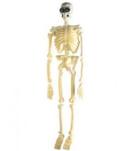 Esqueleto 1,50 m