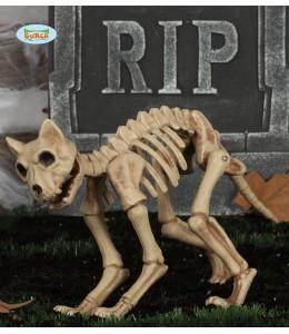 Esqueleto Gato 32 cms
