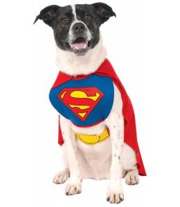 Disfraz de Superman Mascota