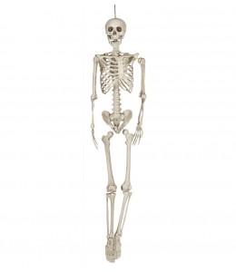 Esqueleto 160 cm