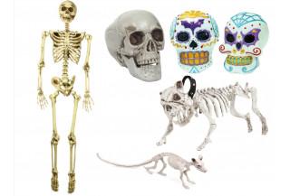 Calaveras y Esqueletos
